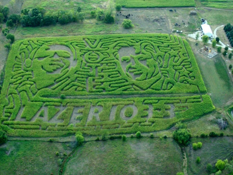 Pumpkin Farms planted its corn crop in the shape of the 2012 presidential candidtes, Barack Obama and Mitt Romney