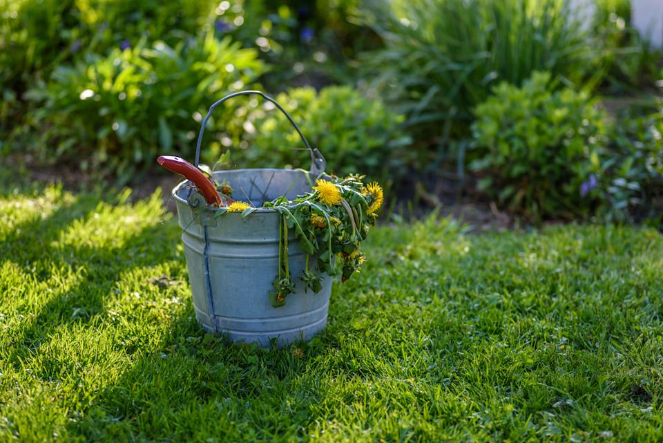 Time to get weeding? (Getty Images)