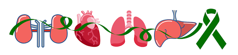 Illustration of kidneys, heart, lungs and liver with a green ribbon, symbol for organ donation support
