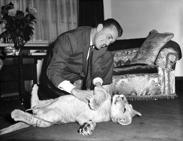 <p>Douglas plays with a lion cub named Spartacus in honor of his iconic film role. </p>