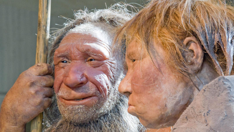 A 36,000-year-old skeleton's DNA has shed light on interbreeding between humans and Neanderthals.