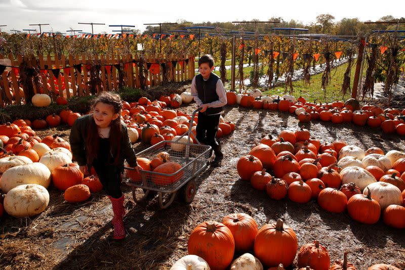 FILE PHOTO: Children pick pumpkins and squashes ahead of Halloween at Cammas Hall Farm in Hatfield Broad Oak