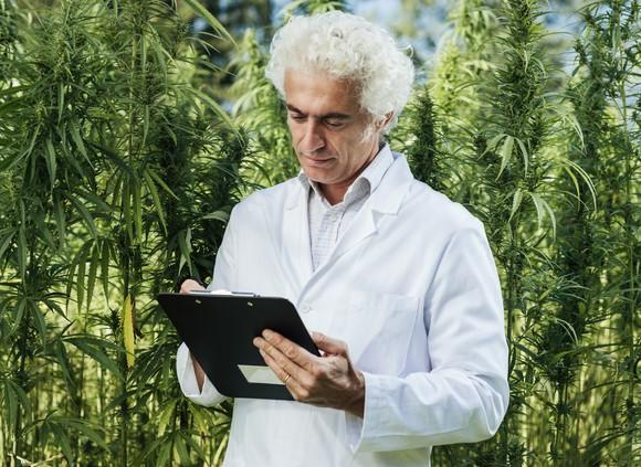 A researcher in a white lab coat making notes on a clipboard while in the middle of an outdoor hemp farm.