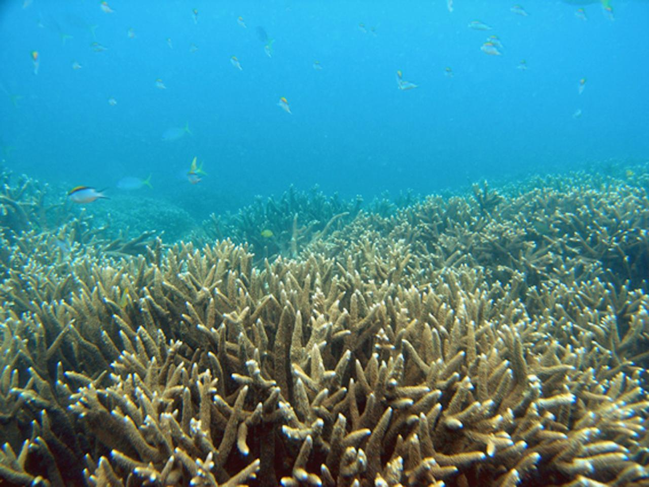 Using economic modelling, it said the reef was worth Aus$29 billion to tourism, supporting 64,000 jobs.
