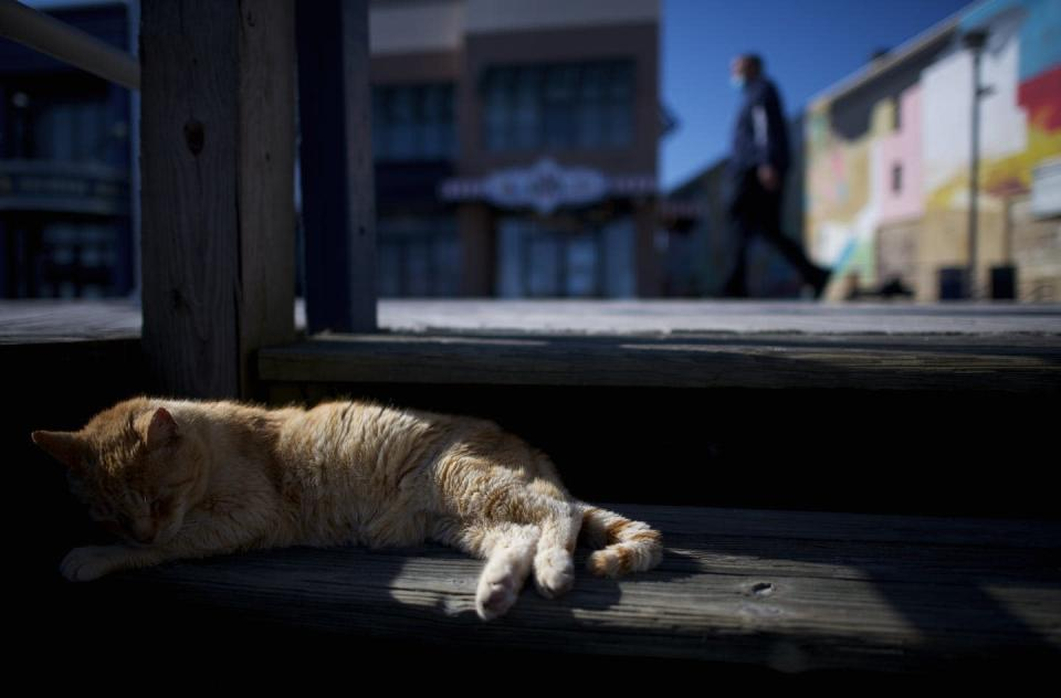 "<span class=""caption"">A cat basks in the New Jersey sunshine amid coronavirus lockdown.</span> <span class=""attribution""><a class=""link rapid-noclick-resp"" href=""https://www.gettyimages.com/detail/news-photo/stray-cat-sleeps-on-the-boardwalk-steps-as-a-pedestrian-news-photo/1212177480?adppopup=true"" rel=""nofollow noopener"" target=""_blank"" data-ylk=""slk:Mark Makela/Getty Image"">Mark Makela/Getty Image</a></span>"