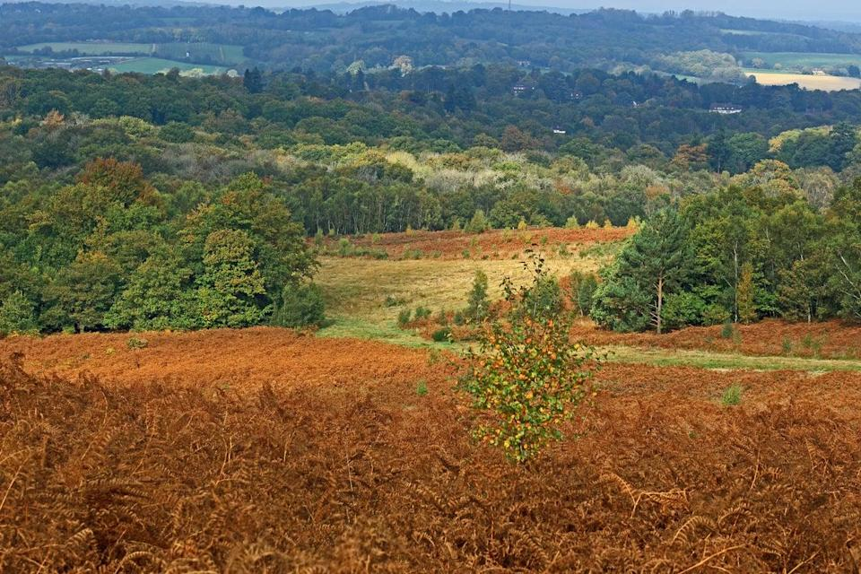 Forest rows sits in Ashdown Forest, aka the Hundred Acre WoodGetty/iStock