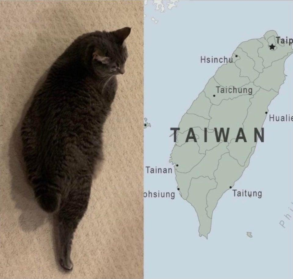 <p>Social media users pointed out the cat's resemblance to Taiwan. (Photo courtesy of @bakuding/Twitter)</p>