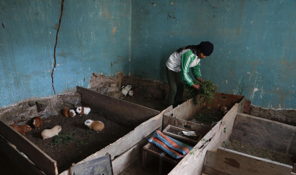 Gracce Kelly Flores, a 12-year-old boxer who goes by the nickname Hands of Stone, feeds her rabbits after her daily boxing workout in Palca, Bolivia, Thursday, June 10, 2021, amid the COVID-19 pandemic. At age 8, Flores defeated a 10-year-old boy, and with three national boxing medals under her belt, she dreams of reaching the women's boxing world championship. (AP Photo/Juan Karita)