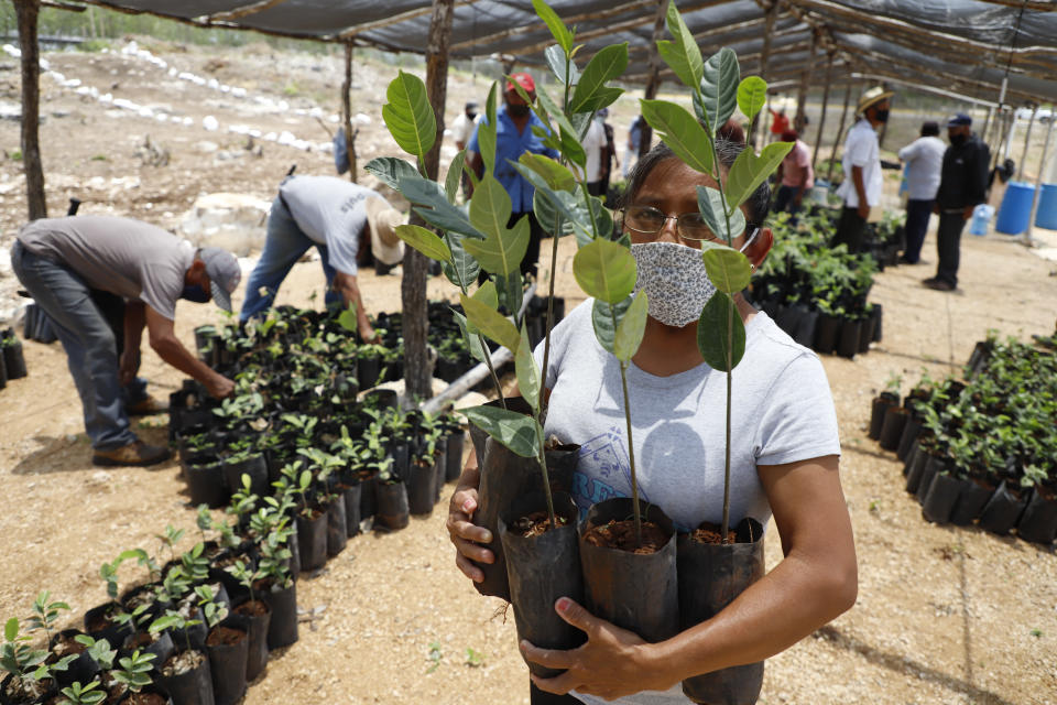 Irma del Socorro Moo Ek, a beneficiary of Planting Life, a jobs and reforestation program promoted by Mexican President Andres Manuel Lopez Obrador, holds seedlings for planting, in Kopoma, Yucatan state, Mexico, Thursday, April 22, 2021. President Lopez Obrador is making a strong push for his oft-questioned tree-planting program, trying to get the United States to help fund expansion of the program into Central America as a way to stem migration. (AP Photo/Martin Zetina)