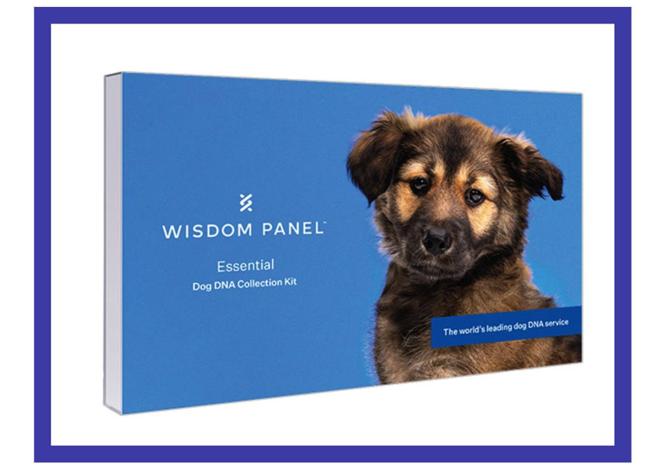 Mutt mystery solved: This DNA kit helps reveal a pet's origins. (Photo: Walmart)