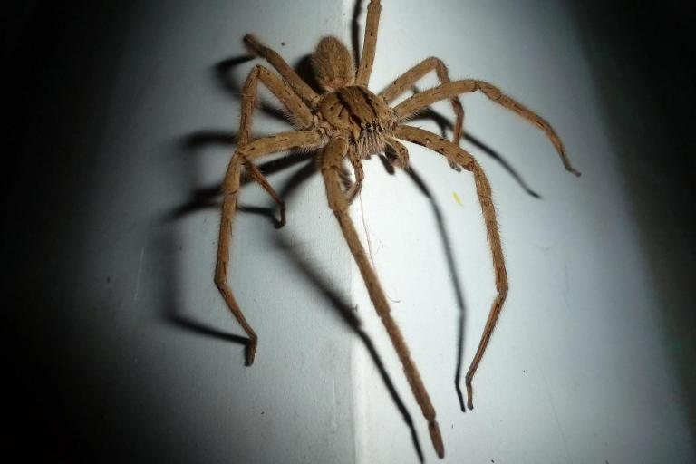 Woman leaps from van after seeing spider in her lap