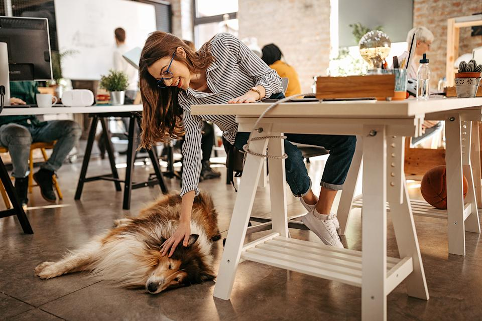 One in five pet owners are planning to take their pet into the office. (Getty Images)