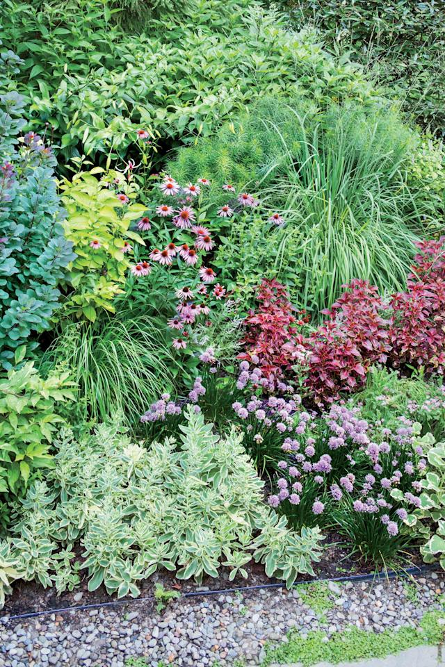 """<p>Katz reminds us that there are as many fabulous plant combinations as there are plants. Here we see variegated """"Autumn Charm"""" sedum, pink """"Millenium"""" allium, red coleus, """"Ruby Star"""" purple coneflower, and yellow """"Aurea"""" Tatarian dogwood.</p>"""