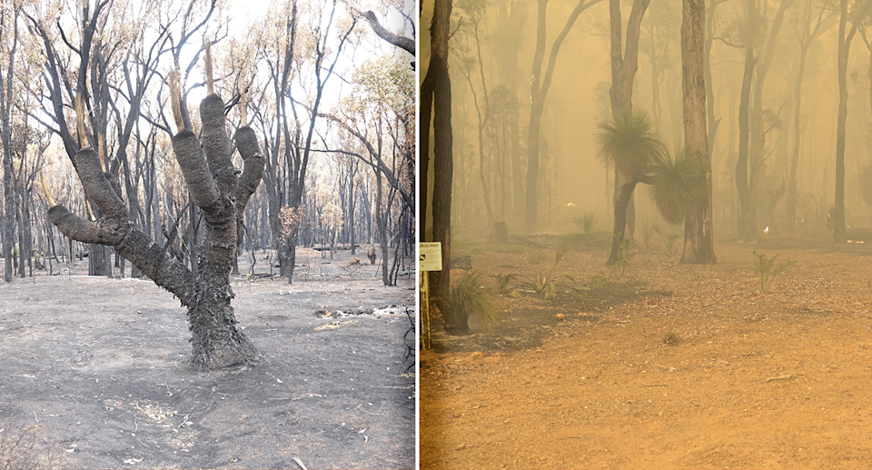 Two images of the burnt forest following hazard reduction burns.