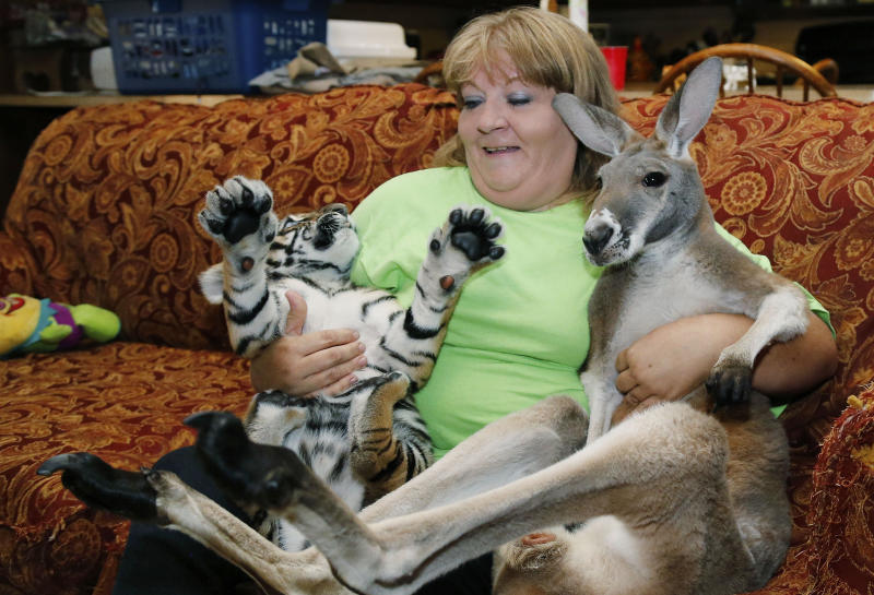 Christie Carr, center, attempts to hold Irwin the kangaroo, right, and Larsen, a baby tiger, at their new home at the Garold Wayne Interactive Zoological Park in Wynnewood, Okla. on Wednesday, Aug. 28, 2013. (AP Photo/Sue Ogrocki)