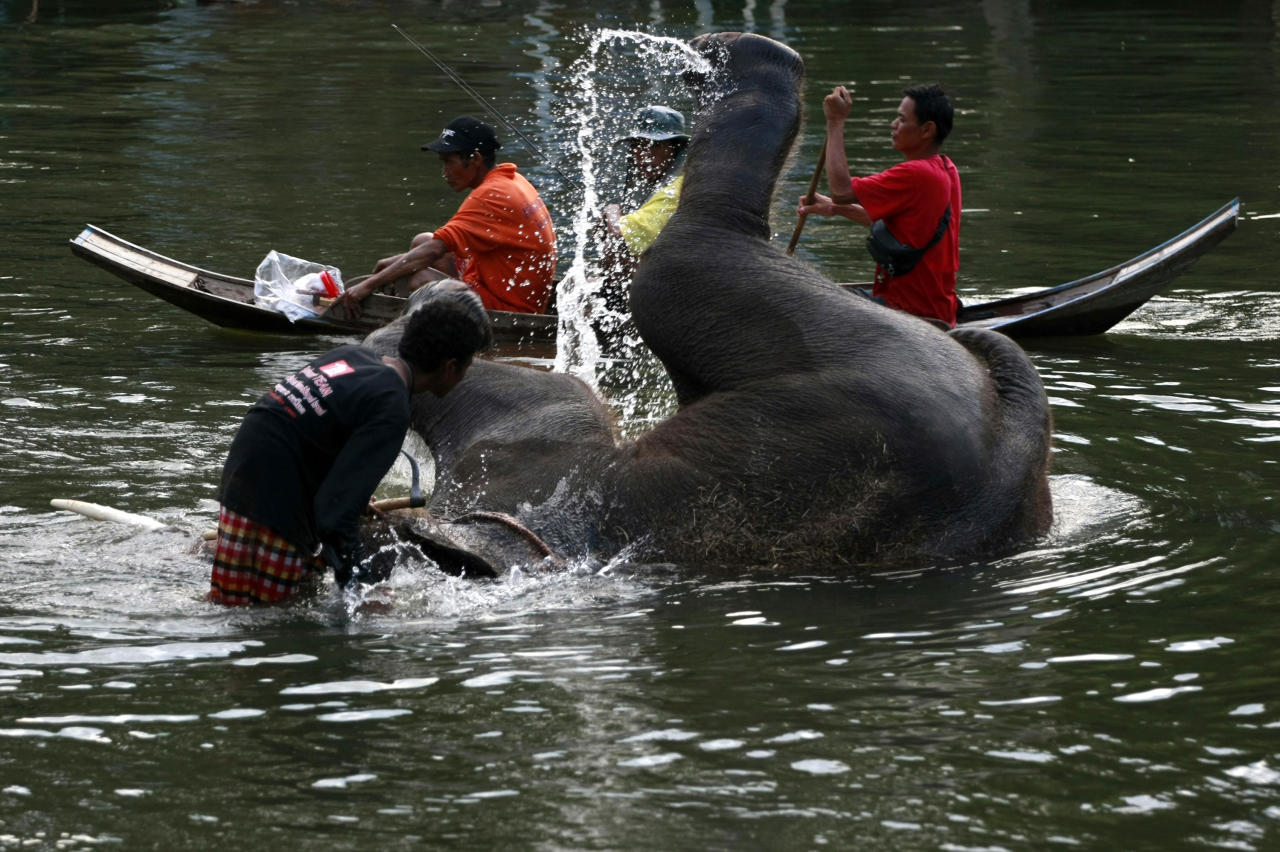 In this photo taken Monday, Oct. 31, 2011, a stranded elephant flips itself while swimming with its mahout in the floodwaters as a boat rows past in Ayutthaya province, central Thailand. Seventeen out of ninety-two elephants were stranded at the elephant camps in Ayutthaya province following floods that submerged north and central part of the country for more than two months. (AP Photo/Apichart Weerawong)