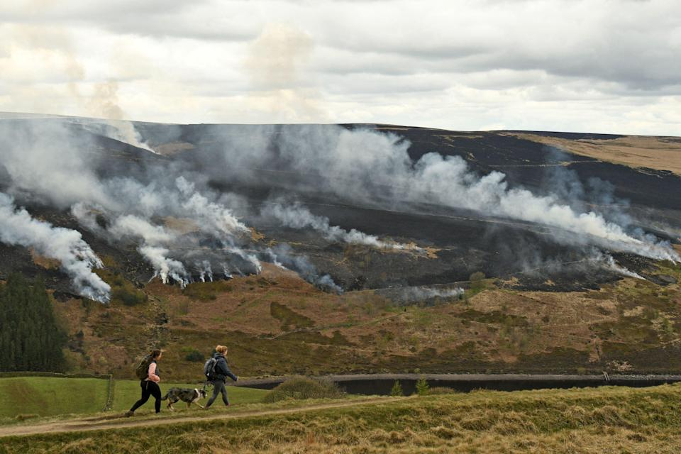 The government has been 'much too slow' to reverse damage to the country's poorly protected peatlands, advisers say (AFP via Getty Images)