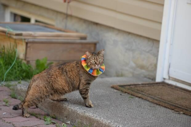 Ken Otter says birds have good colour vision and that high-visibility cat collars appear to help birds avoid predatory house cats. (Ken Otter - image credit)