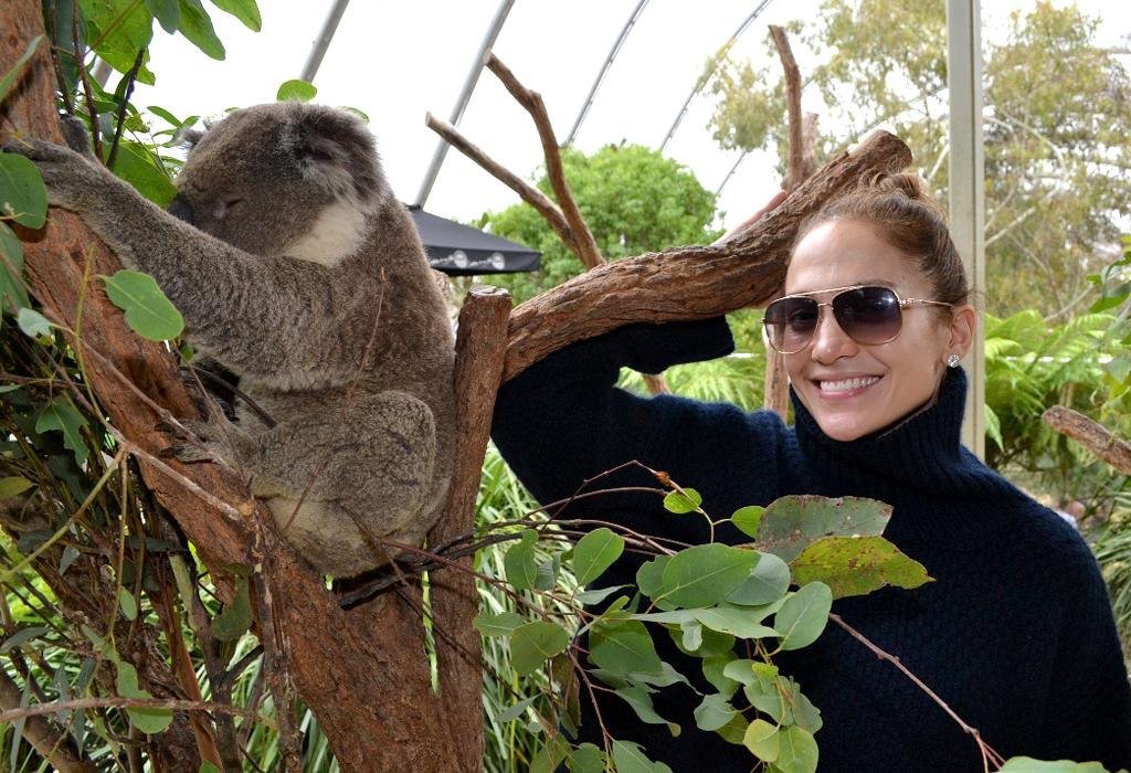 Jennifer Lopez says G'day to a koala at the Wild Life Sydney Zoo attraction. Jennifer did the tourist thing in Sydney, Australia. She took her two children and boyfriend Casper Smart to the venue in the city's Darling Harbour.
