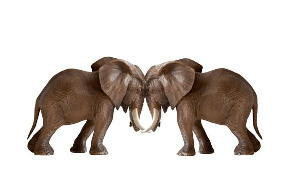 Elephants standing head-to-head against each other