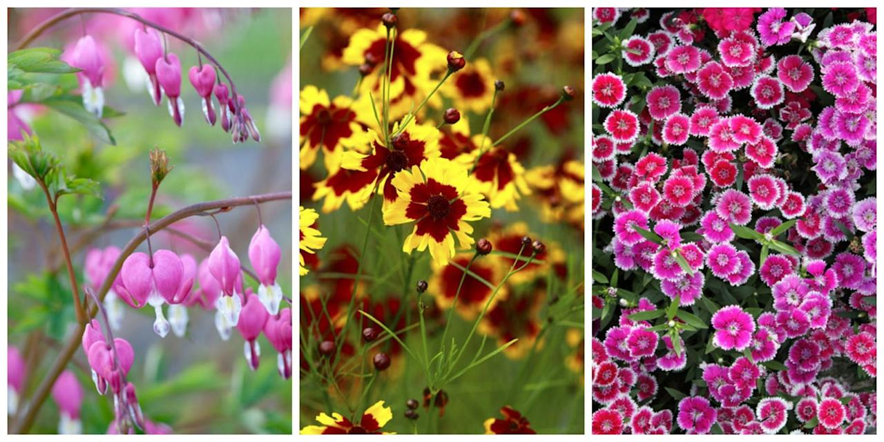 The 10 Best Perennial Flowers For Any Yard