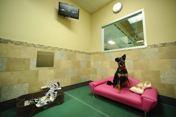 Check (in), mate: Love hotel for dogs to open in Brazil