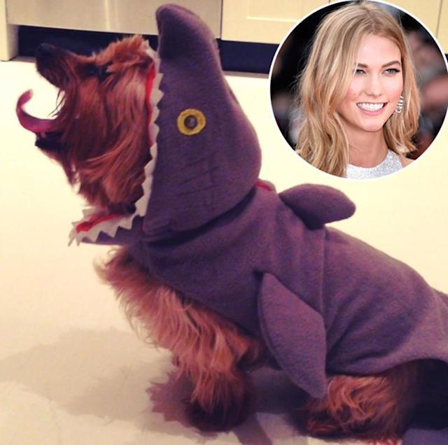 "<p>Model Karlie Kloss gave her pet a <a href=""https://www.instagram.com/p/gjQUOZkSpx/"" rel=""nofollow noopener"" target=""_blank"" data-ylk=""slk:fierce costume"" class=""link rapid-noclick-resp"">fierce costume</a> in 2013, but the pup was still adorable! ""It's a bird… it's a plane…. it's Joe Joe the Shark-Dog!"" she joked. (Photo: Instagram/Karlie Kloss; Getty Images) </p>"