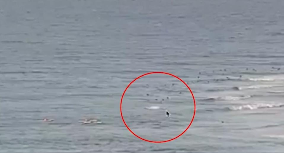A Swellnet surf camera captured the attack at Greenmount Beach on camera.