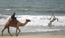 A man plays with a horse as another rides a camel at the Mediterranean Sea beach of Gaza City in the northern Gaza Strip, Friday Oct. 1, 2021. The beach is one of the few open public spaces in this densely populated city. (AP Photo/Hatem Moussa)