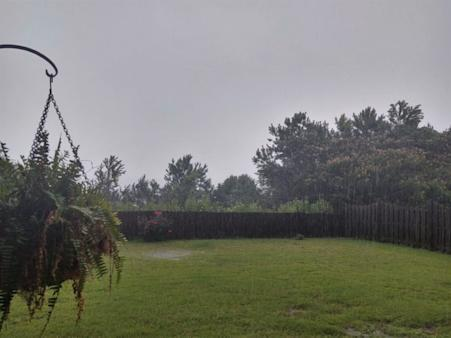 Image of plants hanging in backyard while it's raining