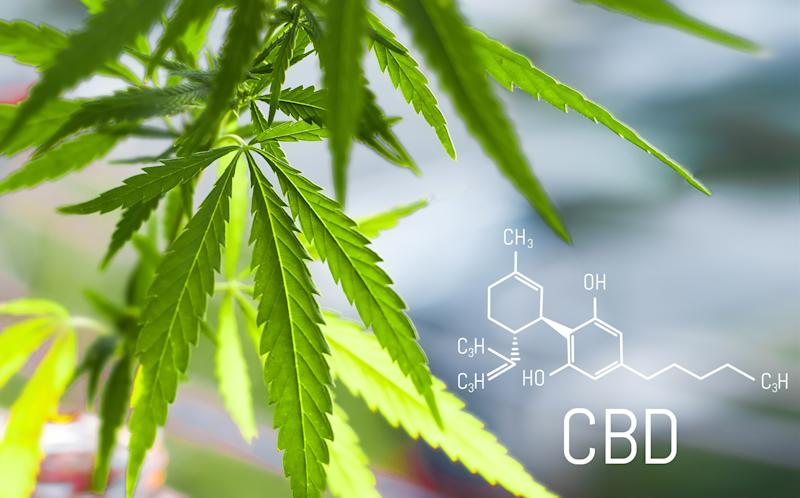 Cannabis plant with CBD chemical structure displayed