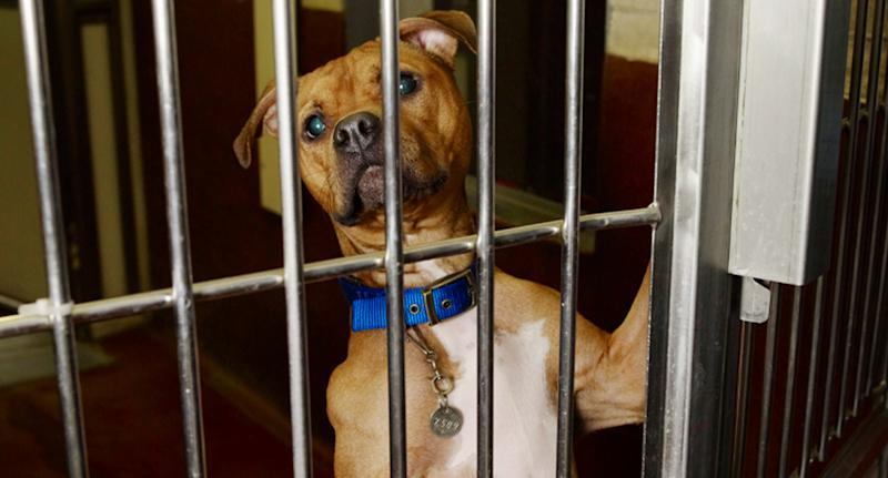 Photo shows dog inside a cage, looking out helplessly.