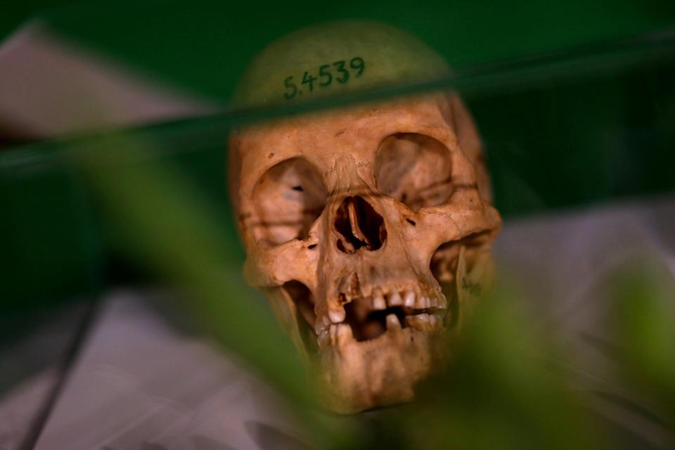Human skulls of tribespeople were displayed during a ceremony in Berlin in 2018 to hand back remains from Germany to Namibia (REUTERS)