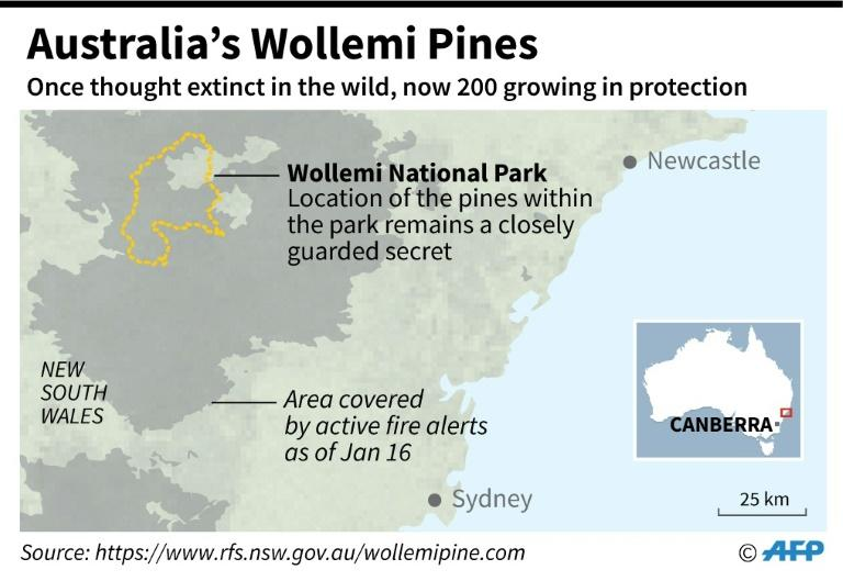 Wollemi National Park in Australia, where pine trees threatened by wildfires have been saved by a protection scheme