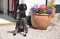 """<p>Passionate about your <a href=""""https://www.prima.co.uk/travel/a31093480/dog-friendly-holidays-with-hot-tub/"""" rel=""""nofollow noopener"""" target=""""_blank"""" data-ylk=""""slk:dog"""" class=""""link rapid-noclick-resp"""">dog</a>? Awarded 'Dog-friendly Business of the Year' in the 2018 VisitEngland Awards, South Devon's Bulleigh Barton Manor welcomes dogs and their owners for a relaxing staycation in a country style B&B. Dogs are treated to the ultimate 'A la Bark breakfast' in the morning, and there are four acres of grounds for furry friends to 'ex-paw'. </p><p><a class=""""link rapid-noclick-resp"""" href=""""https://www.bulleighbartonmanor.co.uk/"""" rel=""""nofollow noopener"""" target=""""_blank"""" data-ylk=""""slk:CHECK AVAILABILITY"""">CHECK AVAILABILITY</a></p>"""