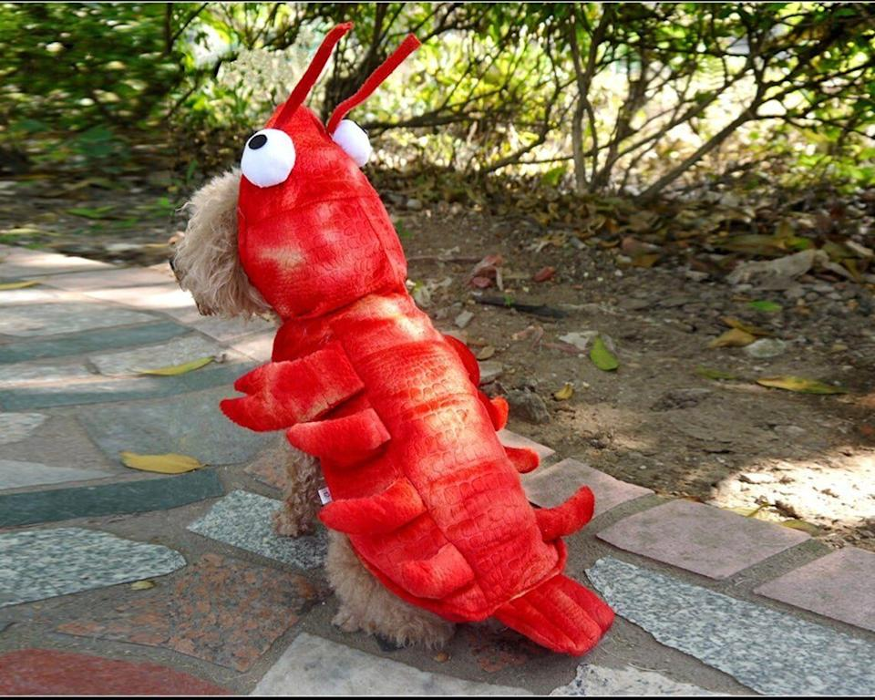 "Get this <a href=""https://fave.co/31easug"" target=""_blank"" rel=""noopener noreferrer"">Lobster Dog Costume for $30</a> at Etsy. It's available in sizes XS-XL and has a hood."