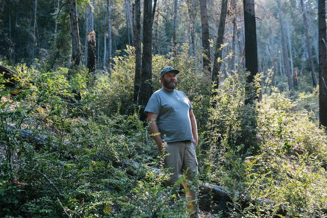 Bill Tripp in a huckleberry patch in Orleans, Calif., which was burned in order to create a plentiful huckleberry gathering site for Karuk tribal members. Tripp said huckleberries need fire to produce fruit. (Alexandra Hootnick for Yahoo News)