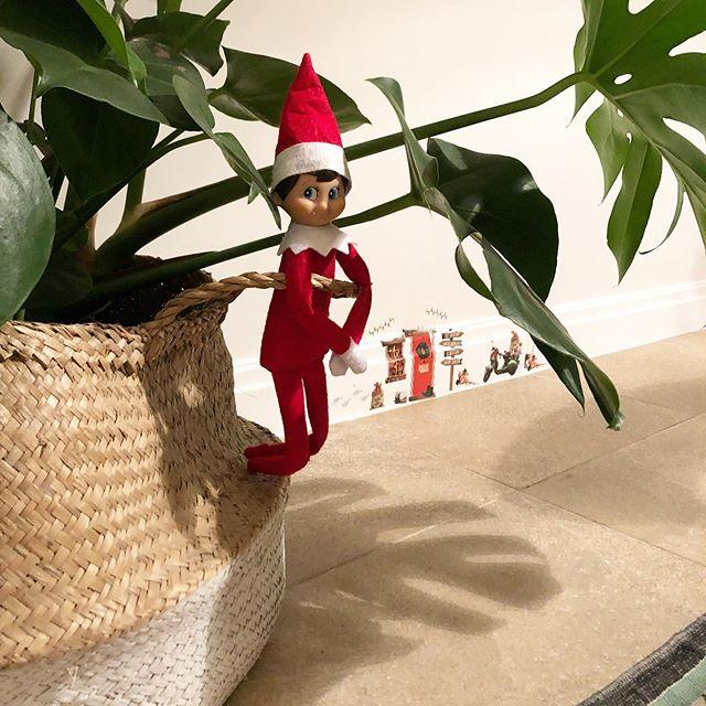 "<p>Because where else would the elf be hiding? It provides plenty of foliage for cover.</p><p><a href=""https://www.instagram.com/p/B5hlZbdpD6s/"">See the original post on Instagram</a></p><p><a href=""https://www.instagram.com/p/B5hlZbdpD6s/"">See the original post on Instagram</a></p><p><a href=""https://www.instagram.com/p/B5hlZbdpD6s/"">See the original post on Instagram</a></p><p><a href=""https://www.instagram.com/p/B5hlZbdpD6s/"">See the original post on Instagram</a></p><p><a href=""https://www.instagram.com/p/B5hlZbdpD6s/"">See the original post on Instagram</a></p><p><a href=""https://www.instagram.com/p/B5hlZbdpD6s/"">See the original post on Instagram</a></p><p><a href=""https://www.instagram.com/p/B5hlZbdpD6s/"">See the original post on Instagram</a></p><p><a href=""https://www.instagram.com/p/B5hlZbdpD6s/"">See the original post on Instagram</a></p><p><a href=""https://www.instagram.com/p/B5hlZbdpD6s/"">See the original post on Instagram</a></p><p><a href=""https://www.instagram.com/p/B5hlZbdpD6s/"">See the original post on Instagram</a></p><p><a href=""https://www.instagram.com/p/B5hlZbdpD6s/"">See the original post on Instagram</a></p>"