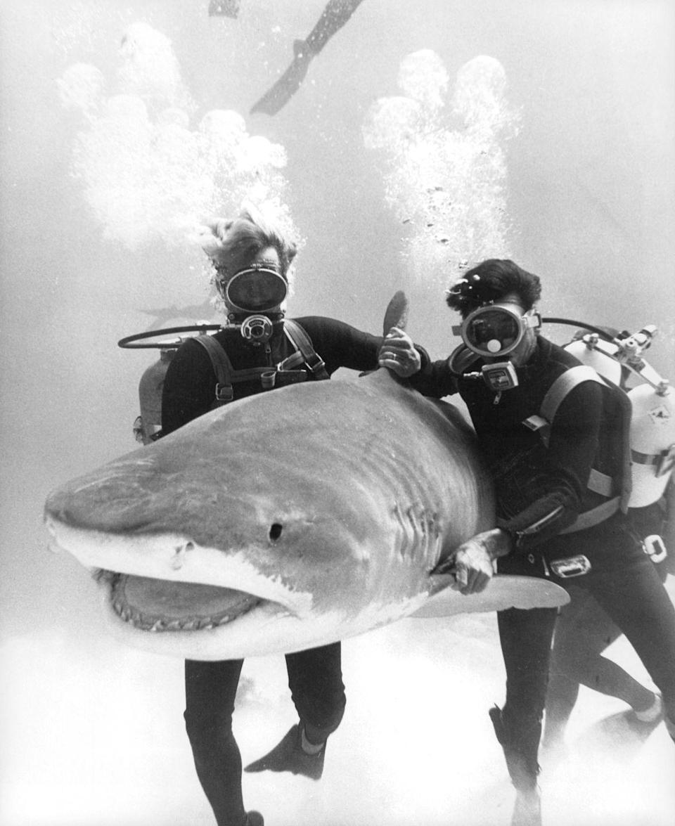 <p>Actors underwater with a shark in a scene from the film Thunderball.</p>