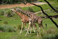 """<p>""""Some of the hotels have the best restaurants and some even have awesome 'attractions', like the live roaming animals at the <a href=""""https://disneyworld.disney.go.com/resorts/animal-kingdom-lodge/"""" class=""""link rapid-noclick-resp"""" rel=""""nofollow noopener"""" target=""""_blank"""" data-ylk=""""slk:Animal Kingdom Lodge"""">Animal Kingdom Lodge</a>. If you schedule a rest and relaxation day, check out the surrounding resorts for all their hidden gems."""" - <a href=""""http://www.quora.com/Tom-Nikl"""" class=""""link rapid-noclick-resp"""" rel=""""nofollow noopener"""" target=""""_blank"""" data-ylk=""""slk:Quora user Tom Nikl"""">Quora user Tom Nikl</a></p>"""