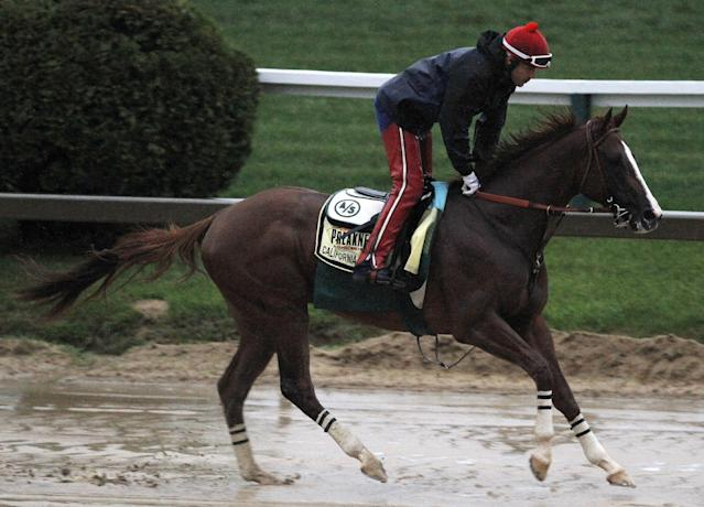 Preakness Stakes favorite California Chrome gallops in the rain under exercise rider Willie Delgado at Pimlico Race Course, Friday, May 16, 2014, in Baltimore. The 139th Preakness Stakes horse race takes place Saturday. (AP Photo/Garry Jones)