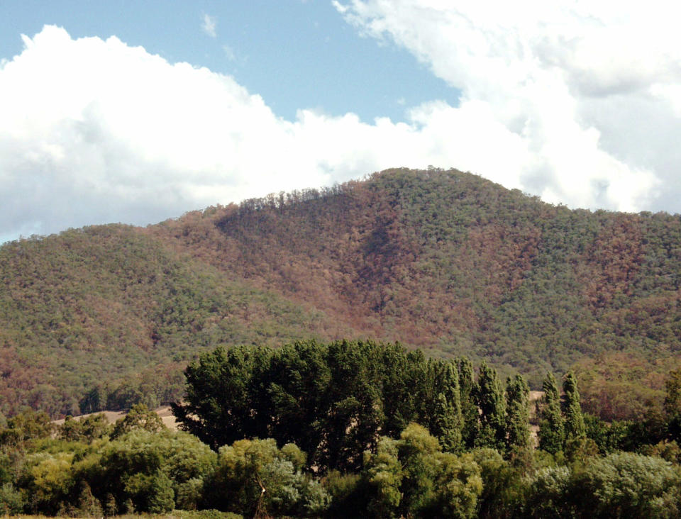 Burnt trees from mountains destroyed by bushfire in the Mount Buffalo area in Victoria.
