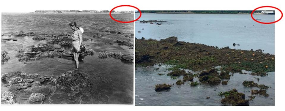 Split screen. A black and white photograph of a lady standing on coral in shallow waters. A colour photograph of the same place without coral.