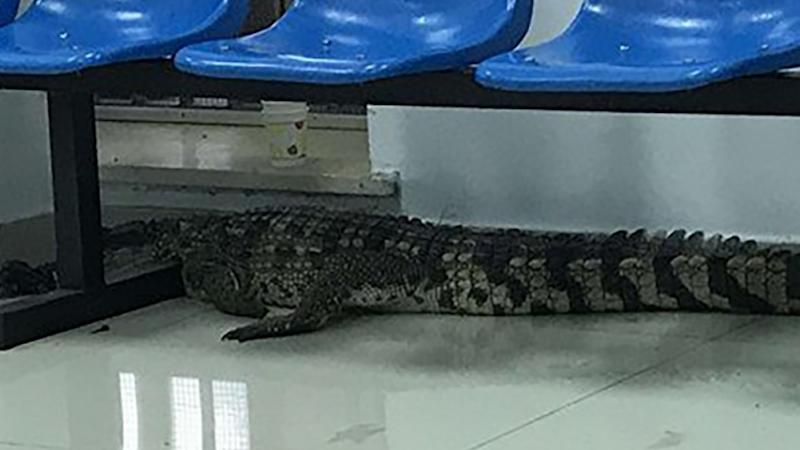 Crocodile shock for security guard at Chinese beauty spot