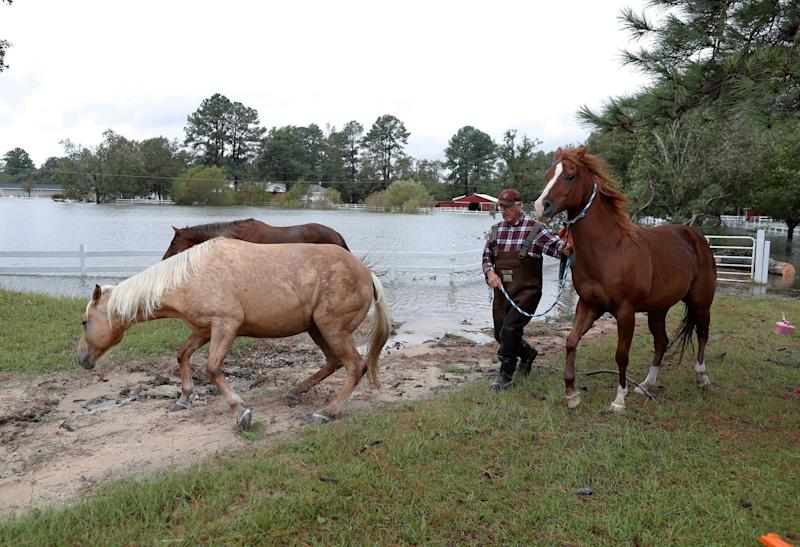 Horses are led to higher ground during Tropical Storm Florence in Lumberton, North Carolina, U.S. September 16, 2018. REUTERS/Randall Hill
