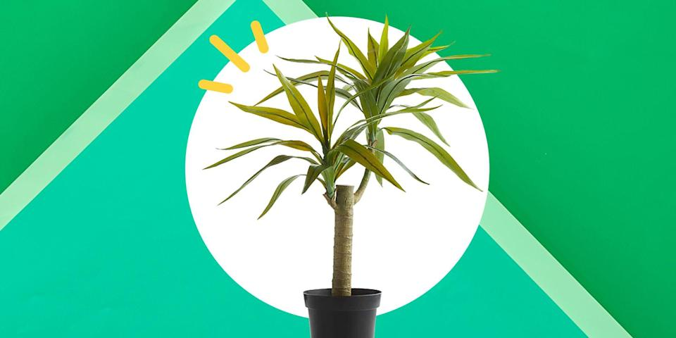 """<p>It's a debate as old as time: Fake plants vs. real plants? Those in the real-plants-only camp often say that pseudo shrubbery can't hold a candle to something that's <em>alive</em>, but what they fail to realize is that some <del>of us</del> people don't really have a choice.</p><p>Not everyone is blessed with a green thumb. And for others, the plants they love are toxic to their pets. (Or simply don't grow in their neck of the woods.) Designer and television host <a href=""""https://www.mikelwelch.com/"""" rel=""""nofollow noopener"""" target=""""_blank"""" data-ylk=""""slk:Mikel Welch"""" class=""""link rapid-noclick-resp"""">Mikel Welch</a> has never shied away from mixing in fake plants as part of his designs, particularly for clients in tough climates. """"This way you could transform a desolate desert"""" into whatever you want, he says.</p><p>Welch doesn't recommend purchasing any old plastic plant, though. You have to consider where you'd be placing it and read up on the materials it's made from first. Often, that might mean shelling out a few more bucks for the right faux plant, but Welch says the long-term savings make it worthwhile (e.g. no repotting materials, fertilizer, or plant sitters when you travel).</p><p>When shopping for a fake plant, Welch suggests opting for silk if the plant will be at eye level (think: tall corner plants or coffee table shrubs). But if it'll be up on a bookshelf, you can probably get away with plastic. Welch also urges people to stay away from plants that have fake river rocks glued to the inside of the pot, stems covered in plastic dew, or anything that looks """"too perfect""""—they're dead giveaways that your plant is, well, not alive.</p><p>You might also mix in a few real elements to trick the eye, says Welch. """"You can sling some actual moss on top of the fake plant to give it the illusion that it's real."""" Or, he recommends placing small, low-maintenance air plants near fake ones. No one will be the wiser, trust.</p><p>Ahead, you'll find the 25 best artifici"""