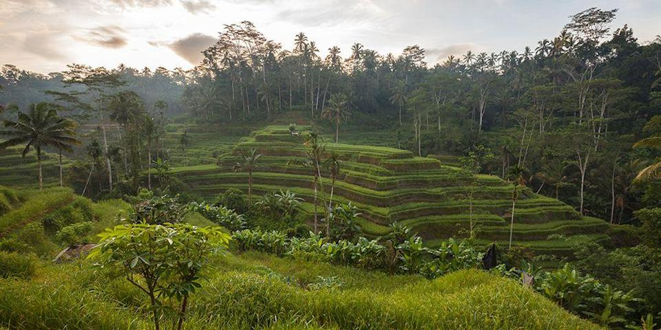 """<p>If you were a fan of the book <em>Eat, Pray, Love</em>, you probably had fantasies about running off to Ubud, the cultural heart of the Indonesian island of <a href=""""https://www.bestproducts.com/fun-things-to-do/a1686/things-to-do-in-bali/"""" rel=""""nofollow noopener"""" target=""""_blank"""" data-ylk=""""slk:Bali"""" class=""""link rapid-noclick-resp"""">Bali</a>. One of the town's most distinctive topographical features are its terraced rice patties, especially the <a href=""""https://www.tripadvisor.com/Attraction_Review-g297701-d1515658-Reviews-Tegalalang_Rice_Terrace-Ubud_Bali.html"""" rel=""""nofollow noopener"""" target=""""_blank"""" data-ylk=""""slk:Tegalalang Rice Terrace"""" class=""""link rapid-noclick-resp"""">Tegalalang Rice Terrace</a>, about 20 minutes north of town. The emerald green terraces spilling down the hillside and framed by coconut trees are truly an unforgettable sight. </p>"""