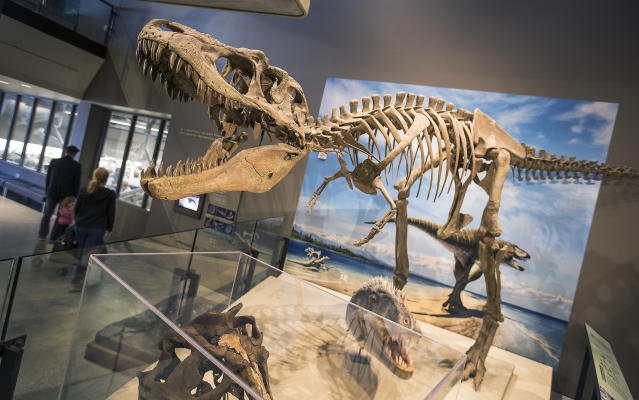 "<span class=""s1"">A full skeletal replica of the Lythronax argestes is displayed at the Natural History Museum of Utah in Salt Lake City. The fossils were found in Grand Staircase-Escalante National Monument. (Photo: Brian van der Brug/Los Angeles Times via Getty Images)</span>"