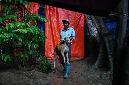 There is widespread public frustration in Myanmar over stray dogs