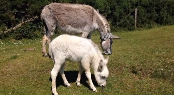 Donkey used in road safety campaign killed by car